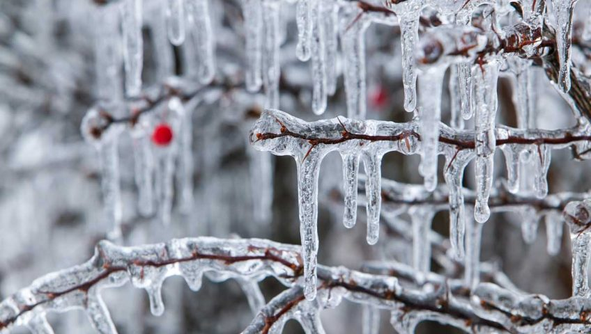 Are You Ready For Ice Storms 3 Key Steps To Help Stop Ice